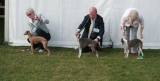 Driffield Championship Show 22nd September 2013 Results Pictures