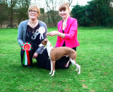 The Italian Greyhound Club Spring Open Show 15th March 2014, Results